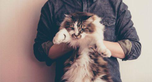 タレント猫/犬のペットモデル事務所への依頼方法・ギャラの ...